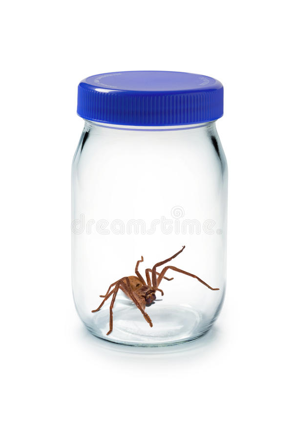 Aranha no frasco de vidro imagem de stock