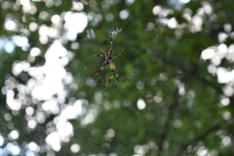 Aranha no parque estadual da curvatura de Brazos foto de stock