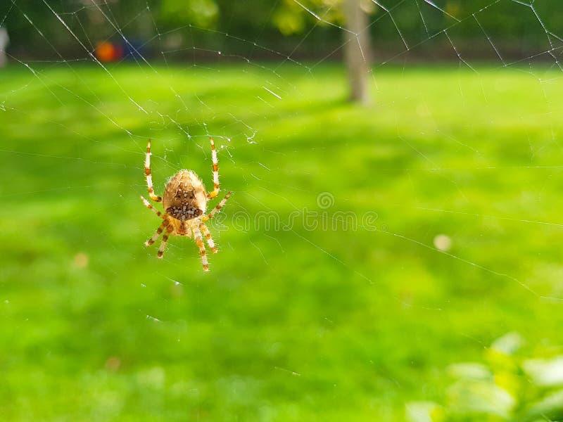 Aranha no spider& x27; Web de s com paisagem e fundo verde imagens de stock royalty free