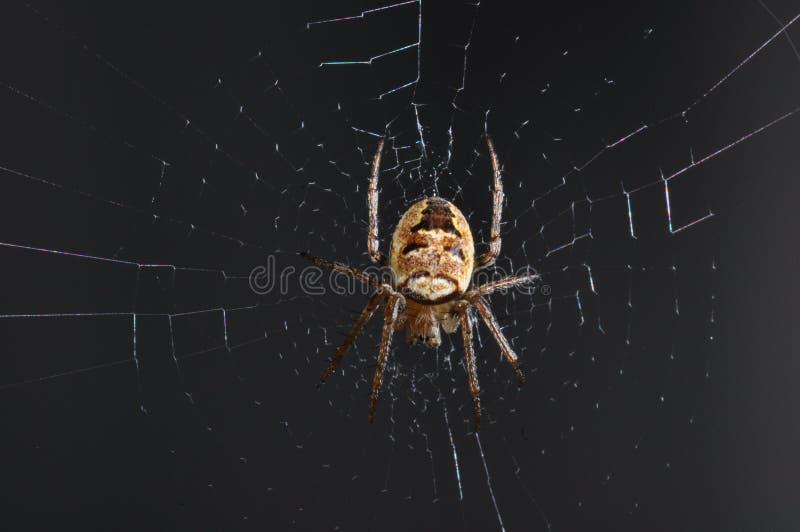 Aranha no Web foto de stock