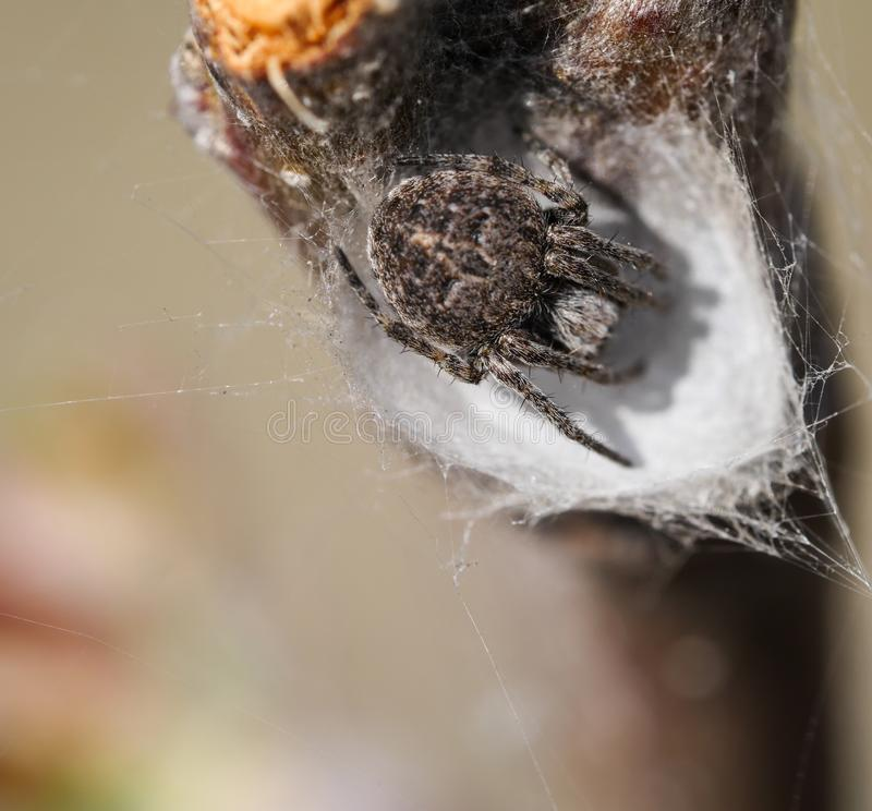 Aranha que senta-se em seu antro imagens de stock royalty free