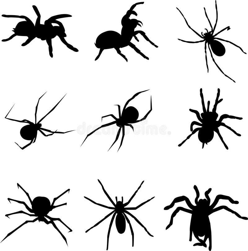A aranha venenosa do mundo ilustração stock