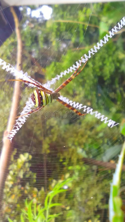 Aranha verde foto de stock