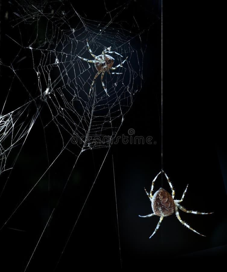 Aranhas do partido na noite de Halloween imagens de stock