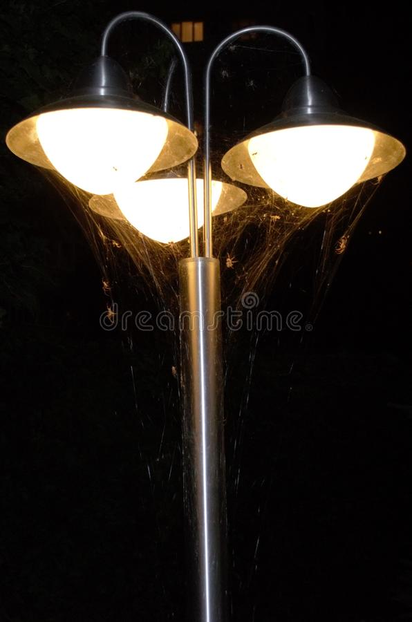 Aranhas na lâmpada foto de stock