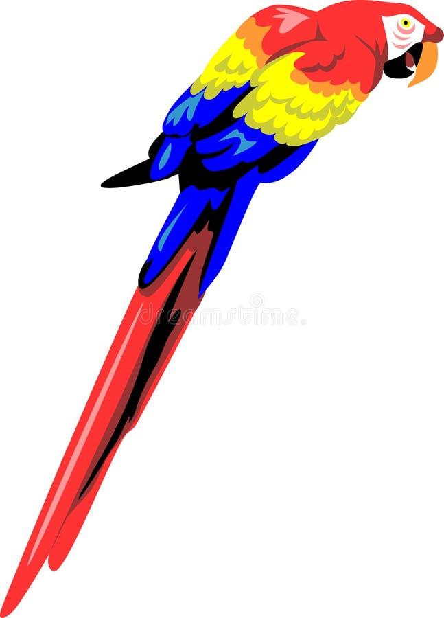 Arara ilustração stock