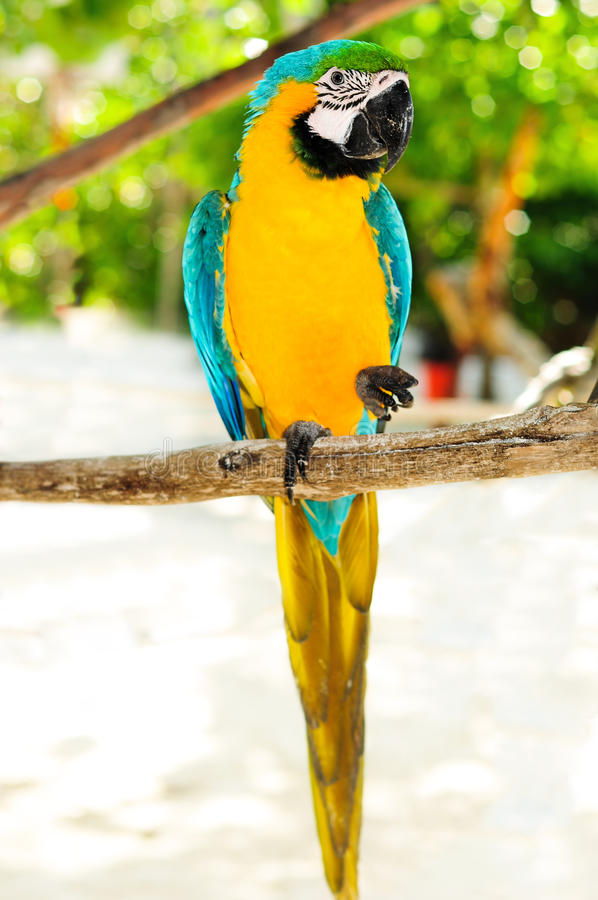 Arara bonita do papagaio na ilha tropical fotografia de stock