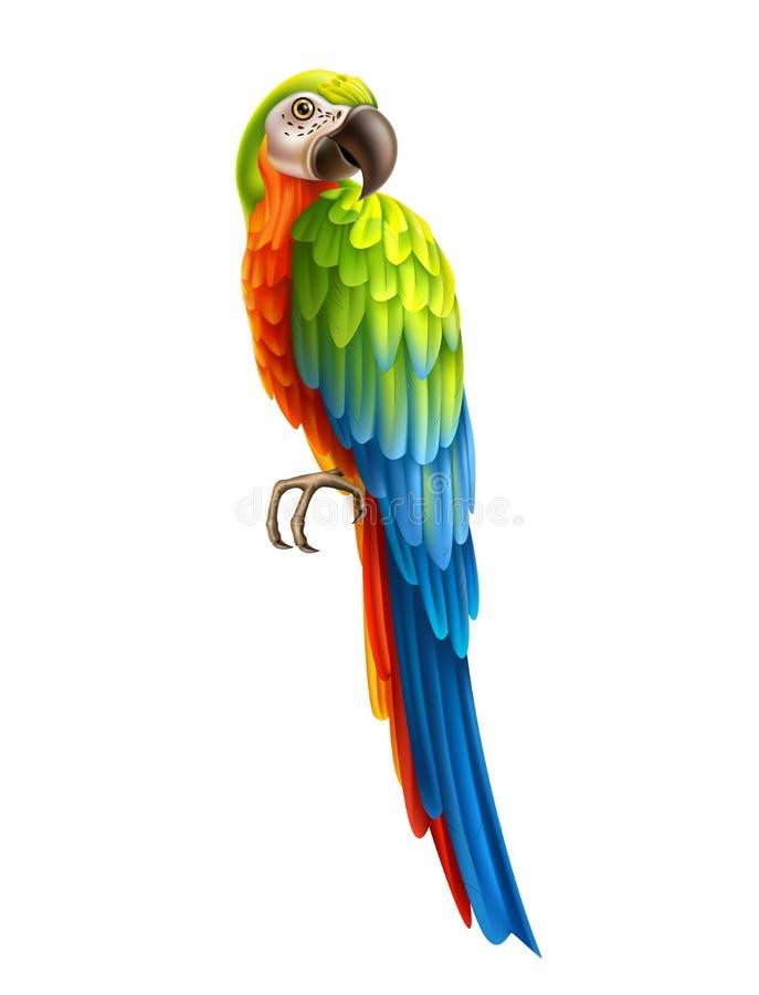 Arara colorida realística do pássaro 3d do papagaio do vetor ilustração stock