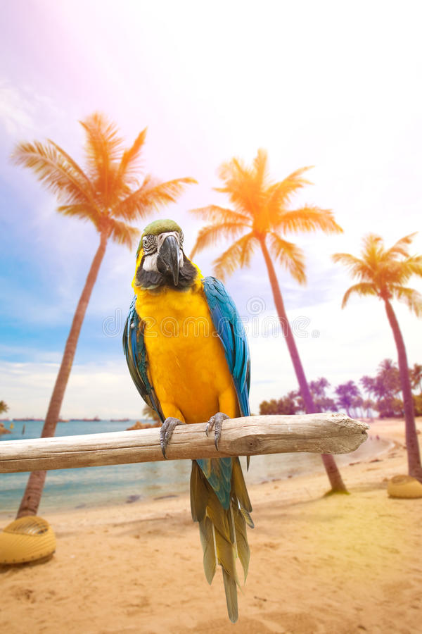 A arara empoleirou-se em um cargo de madeira que aprecia o calor do sol da noite pela praia fotos de stock royalty free