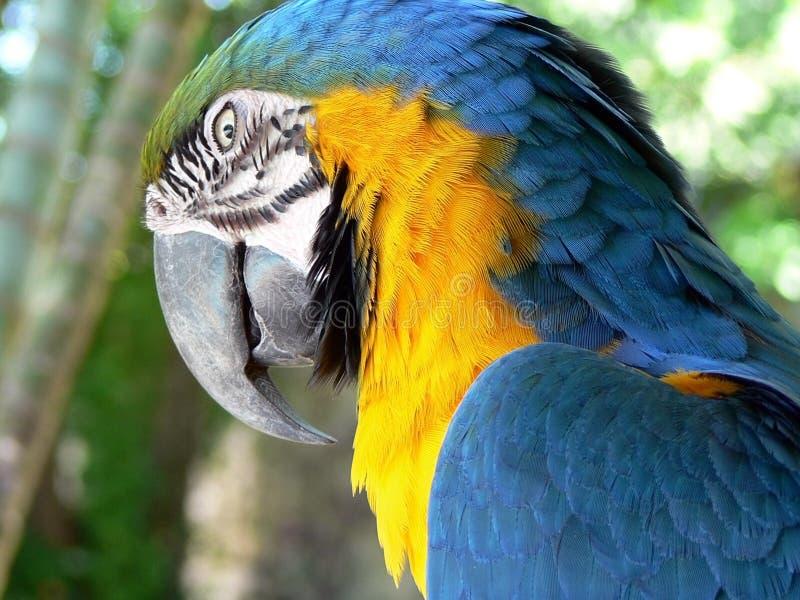 ararafågel arkivfoto
