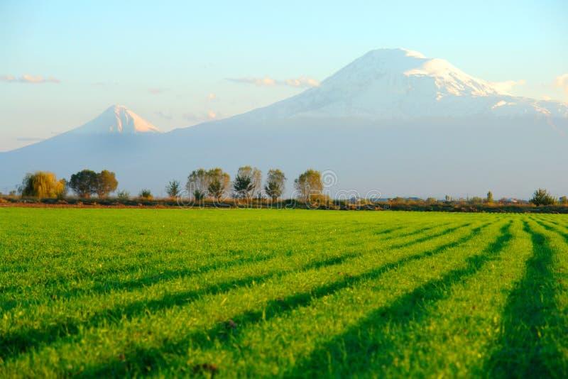 Ararat image stock