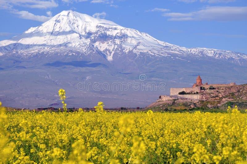 Ararat in Armenië royalty-vrije stock afbeelding