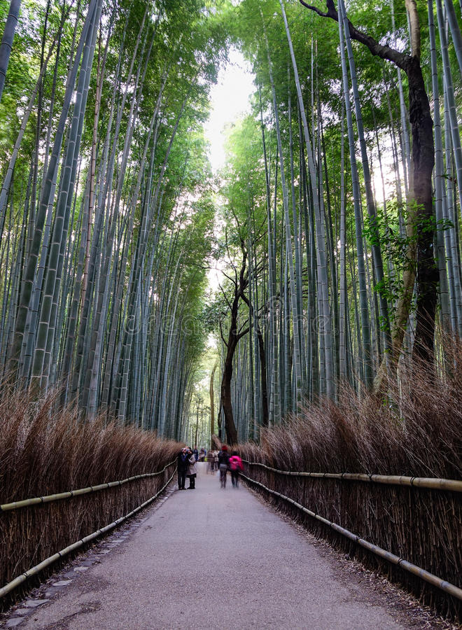 Arashiyama的竹树丛在京都,日本 库存图片