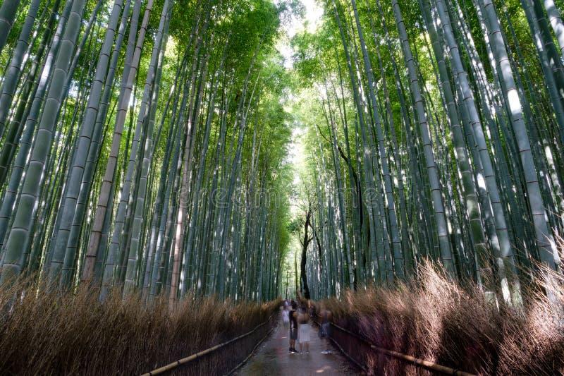 Arashiyama的,京都著名竹树丛 免版税库存图片