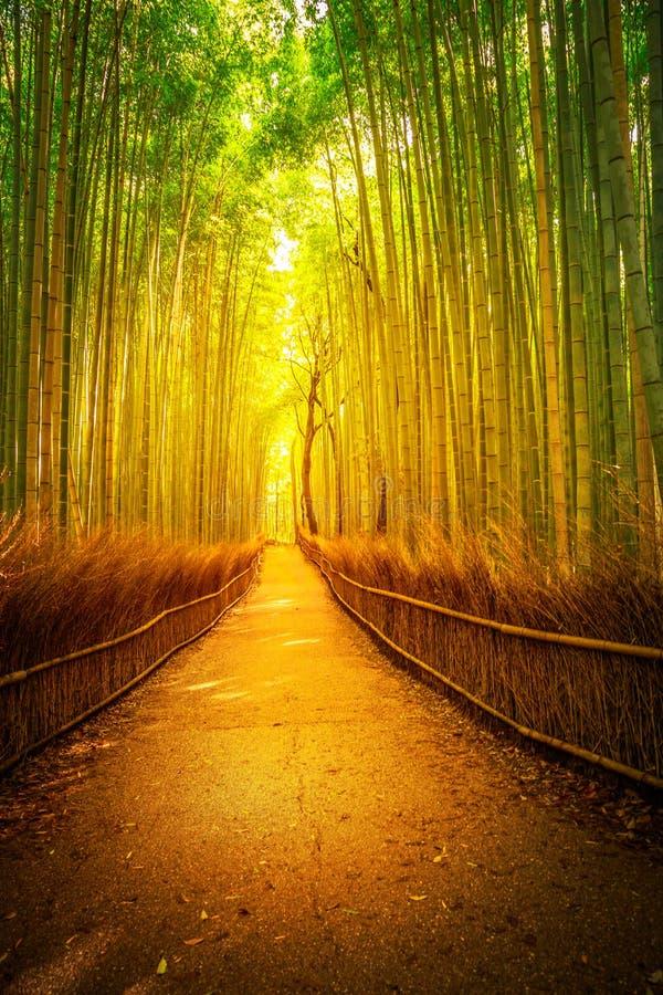 Arashiyama竹子京都 库存照片
