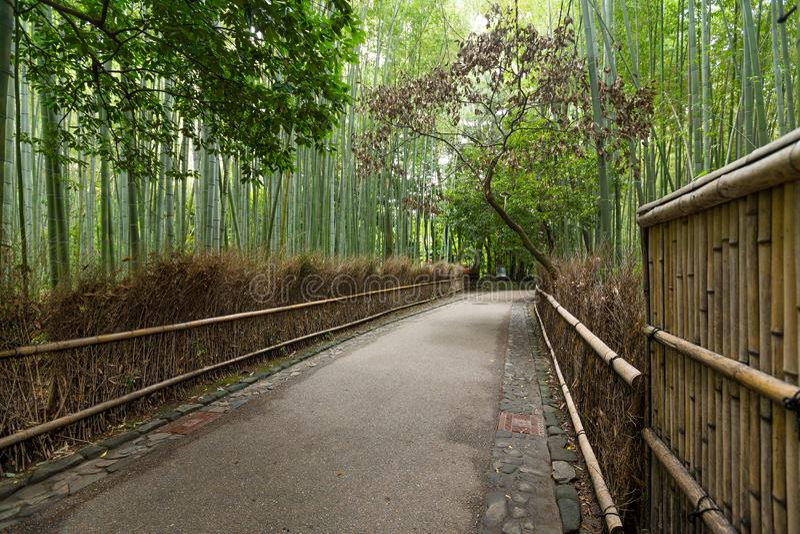 Arashiyama竹树丛  免版税库存图片