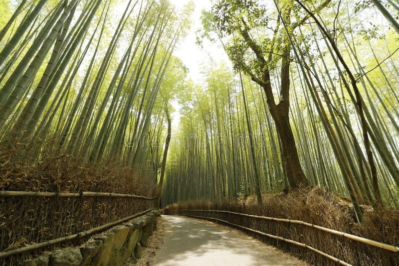 Arashiyama obrazy royalty free