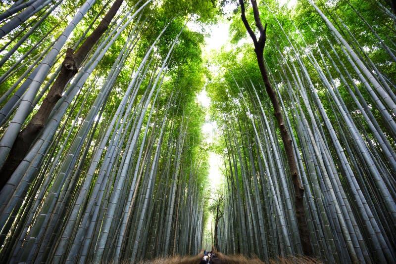 Arashiyama royalty-vrije stock afbeelding