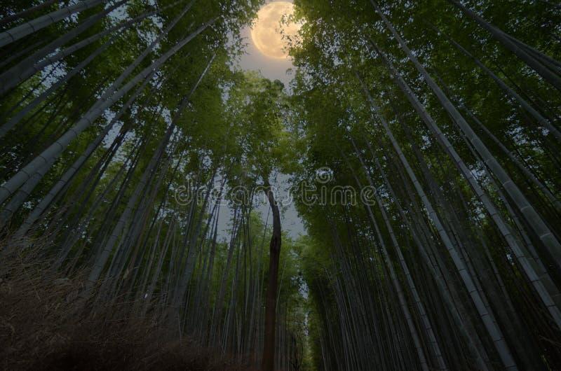 Arashiyama Bambino forest. Kyoto Japan. Arashiyama Bambino forest with full moon stock photos