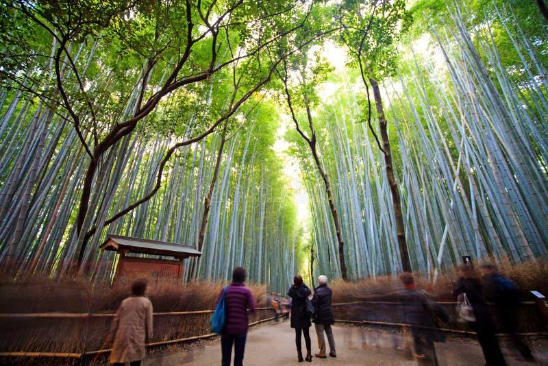 Arashiyama bamboo forest trails. Kyoto, Japan royalty free stock image