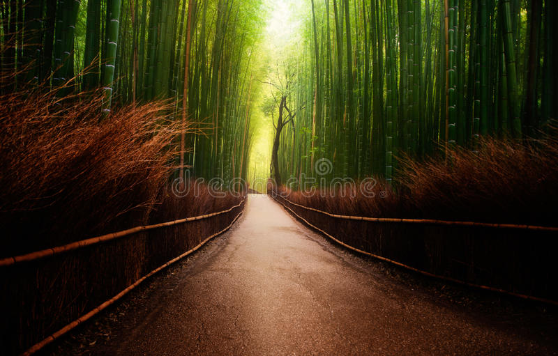 Arashiyama bamboo grove in Japan royalty free stock photo