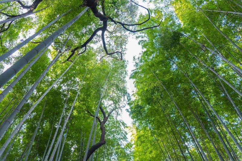 Arashiyama Bamboo Grove Zen garden, a natural forest of bamboo in Arashiyama, Kyoto royalty free stock photo