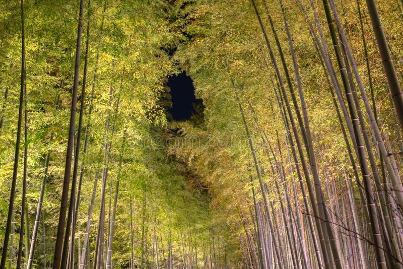 Arashiyama Bamboo Grove Zen garden, a natural forest of bamboo in Arashiyama, Kyoto stock photography