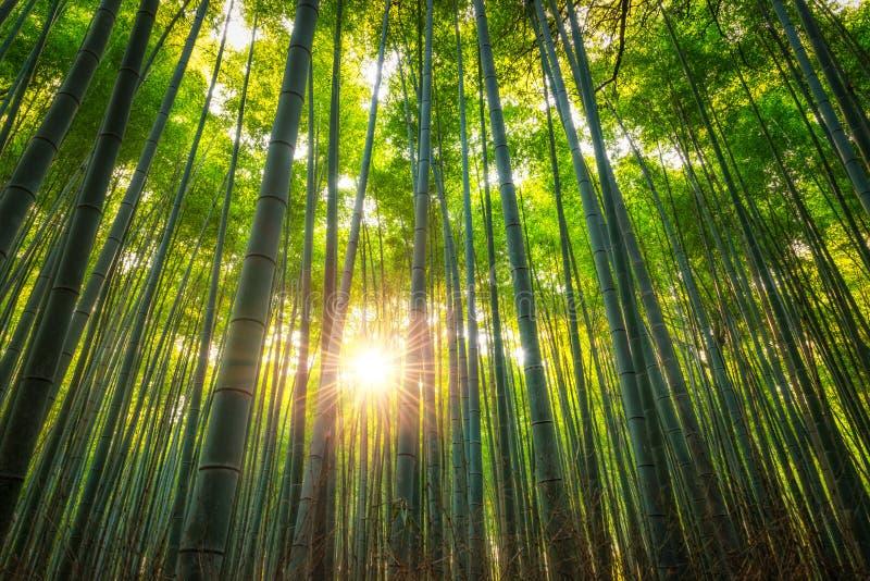 Arashiyama bambudunge arkivfoto
