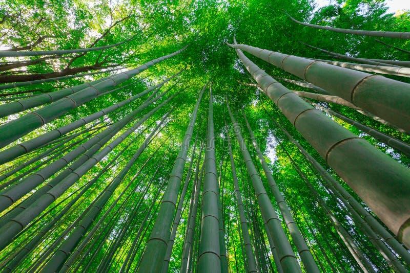 Arashiyama bambudunge royaltyfri bild