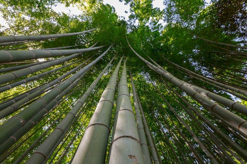 Arashiyama bambudunge royaltyfria bilder