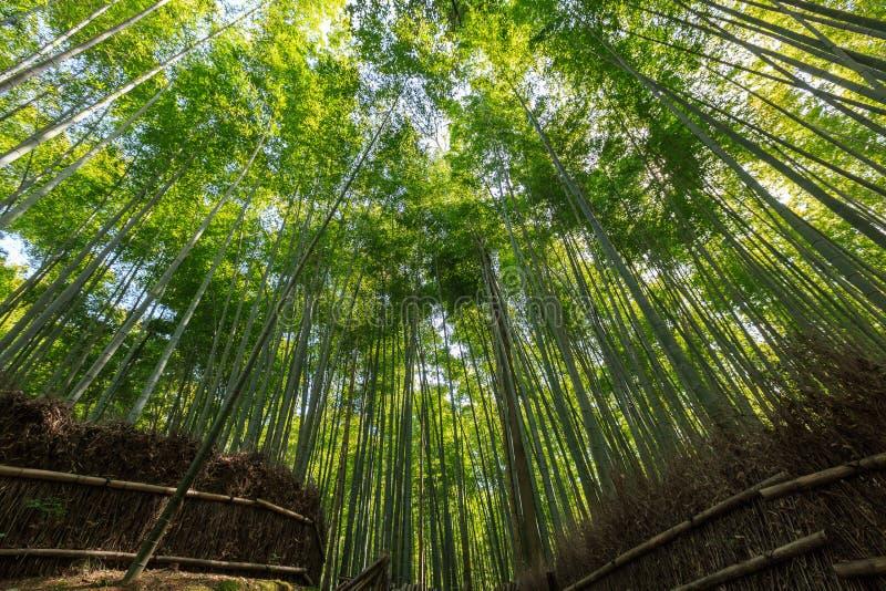Arashiyama bambudunge royaltyfria foton