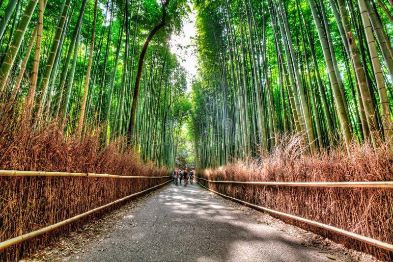Arashiyama bambudunge, HDR arkivbilder