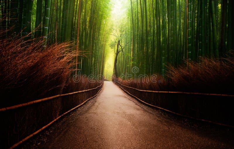 Arashiyama bambudunge i Japan royaltyfri foto
