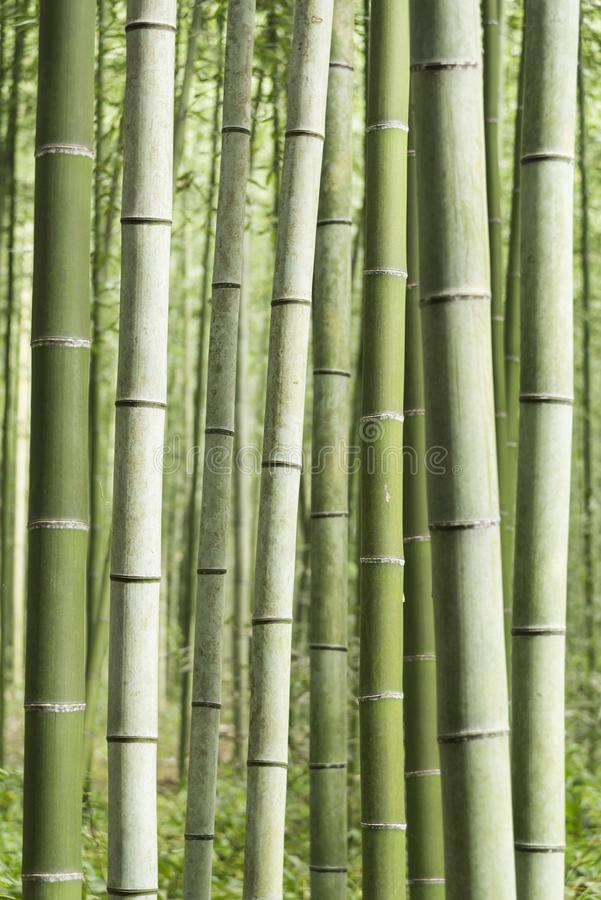 Arashiyama bambudunge Japan royaltyfri fotografi