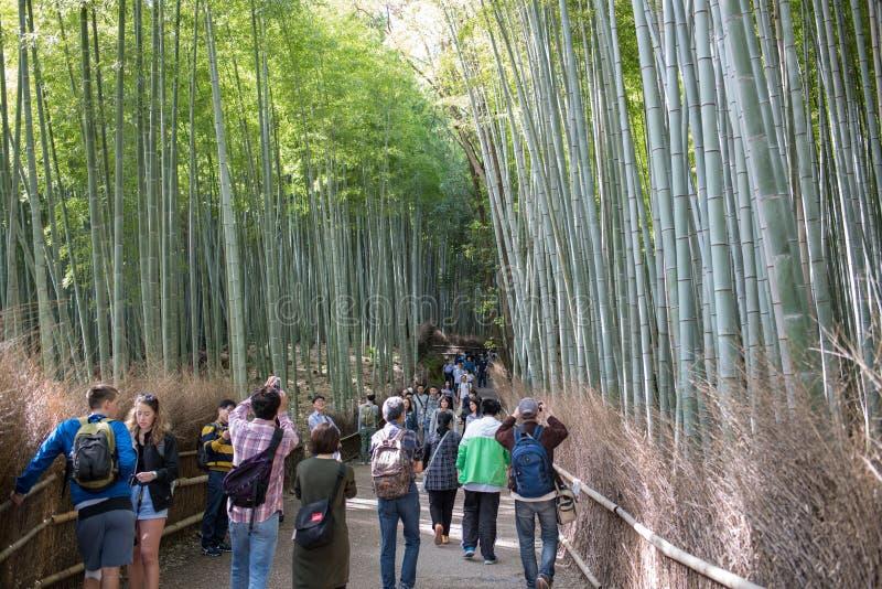 Arashiyama bambudunge arkivbilder