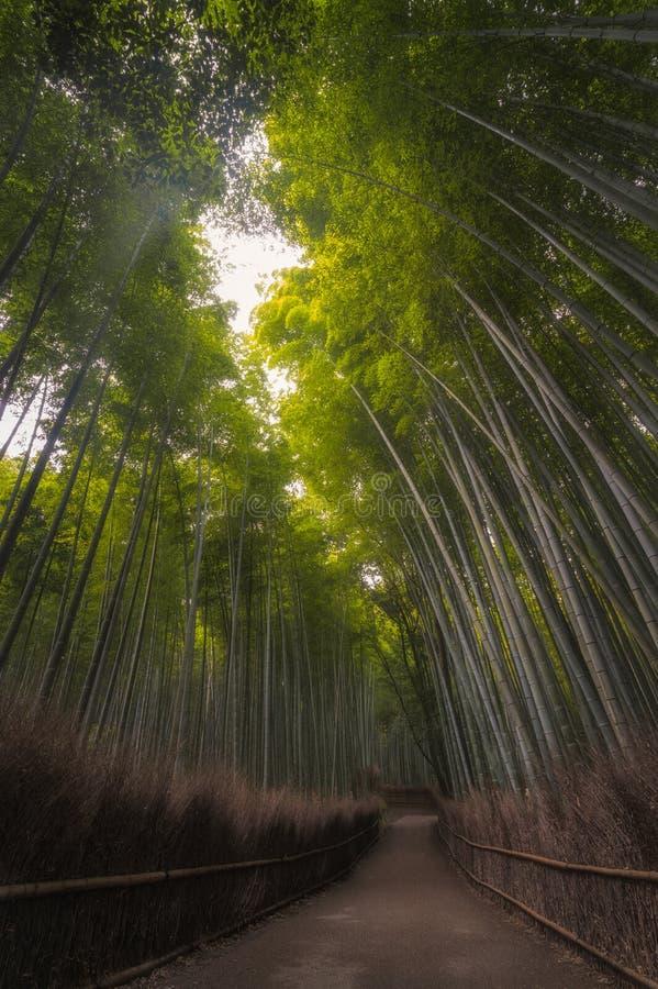 Arashiyama bambusa gaj zdjęcie stock