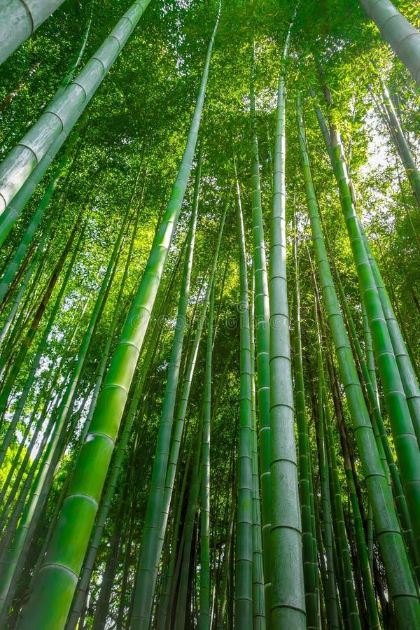 Arashiyama bambusowy las, Kyoto, Japonia zdjęcia stock