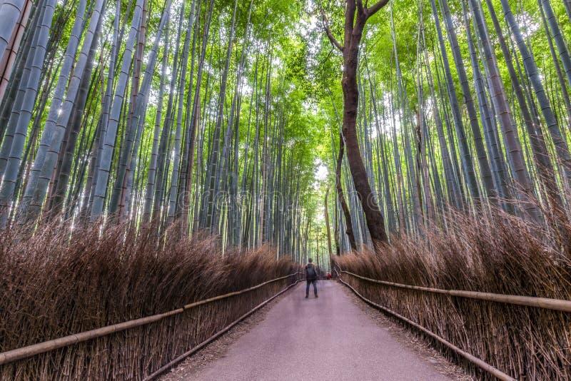 Arashiyama bambuspår royaltyfri bild