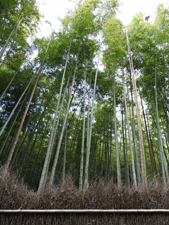 Arashiyama-Sagano Bambusowy las, Kyoto, Japonia zdjęcie stock