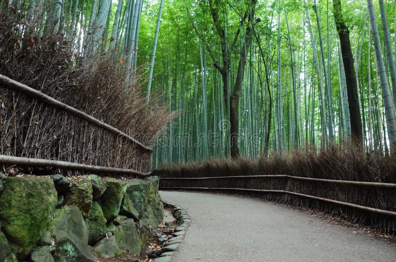Arashiyamabamboe van Japan Kyoto royalty-vrije stock foto's