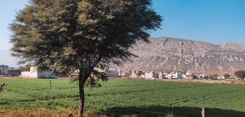 Aravalli在Rajathan,有绿色农业领域的印度的小山范围 图库摄影