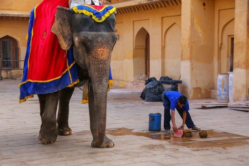Arbeider die olifantsachterschip in de hoofdbinnenplaats van Jaleb opnemen Chowk stock foto's