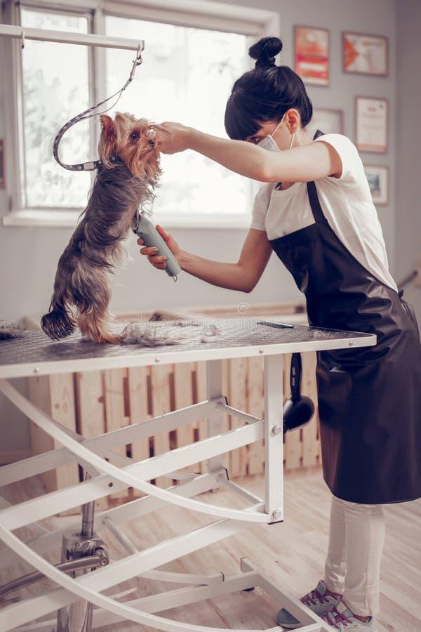 Arbeider van het verzorgen salon leuk scheren weinig hond royalty-vrije stock afbeeldingen