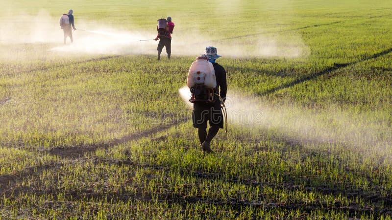 Arbeiders die herbiciden bespuiten stock foto's