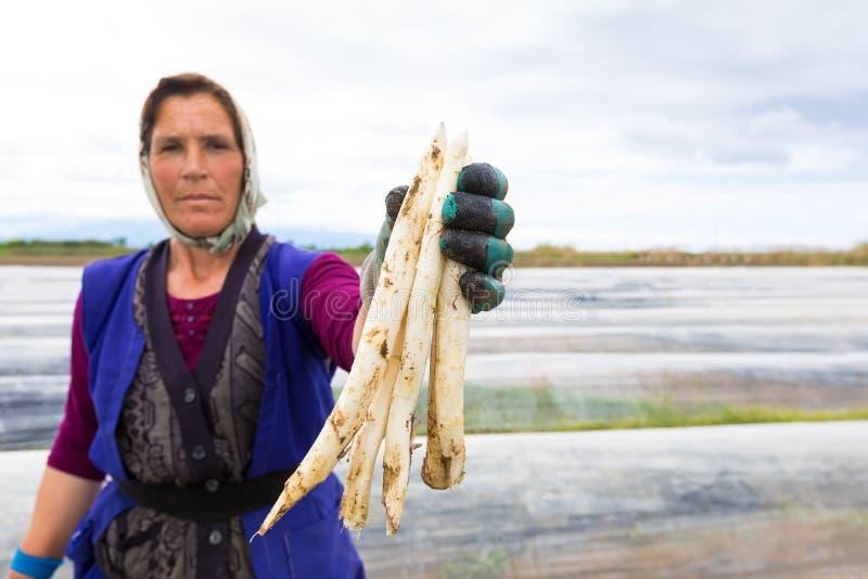 arbeiders in het landbouwbedrijf tijdens het oogsten witte asperge royalty-vrije stock fotografie