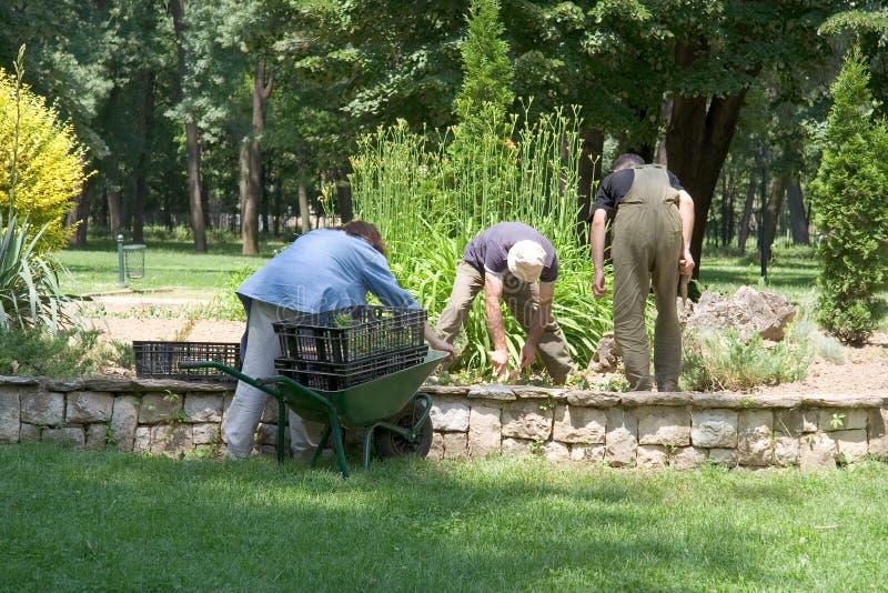 Arbeiders in het park stock foto