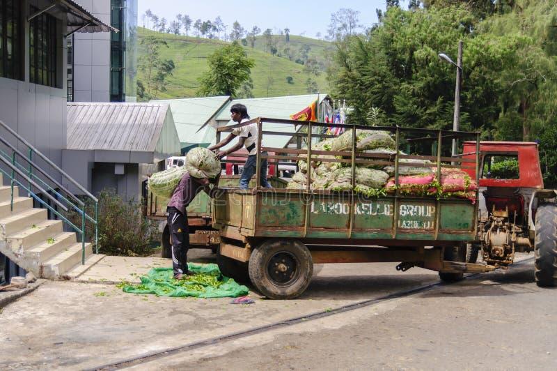 Arbeiders op de theefabriek stock afbeelding