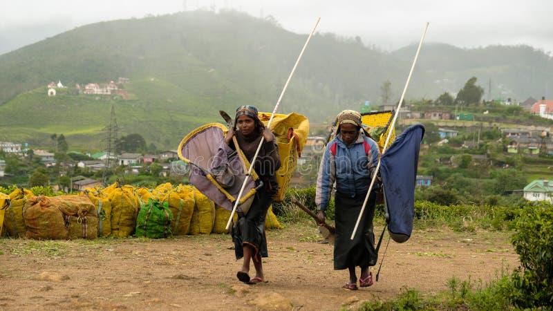 Arbeiders van de blauwe theeaanplanting royalty-vrije stock foto's