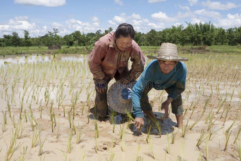 Arbeit über das Paddyfeld, Asien lizenzfreies stockbild