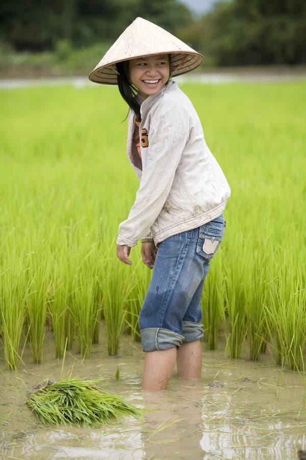 Arbeit über das Reisfeld, Laos stockfoto